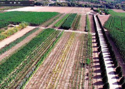 Aerea Viveros Ebro 04