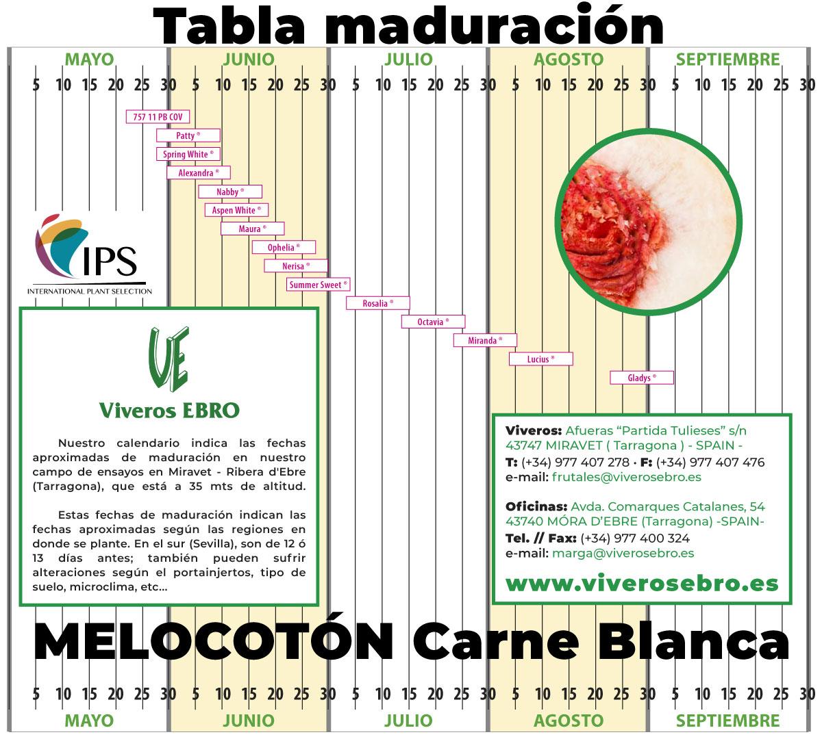 Cuadro Maduracion Melocoton Carne Blanca 2021