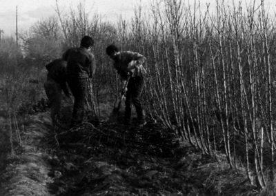 Historia Viveros Ebro 2