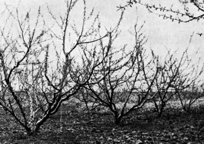 Historia Viveros Ebro 9